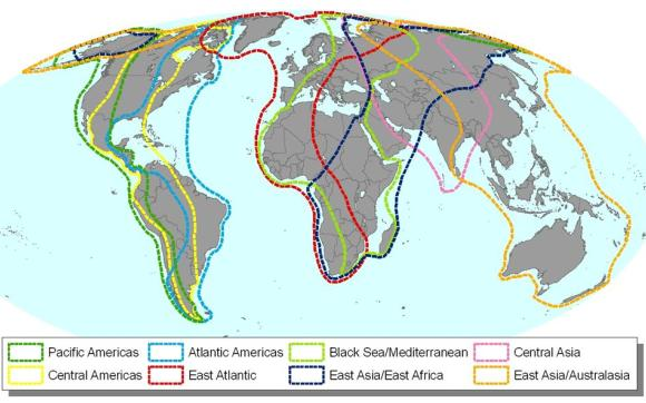 Birdlife global flyways map